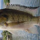 Sine Aquaculture
